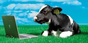 cow-pc