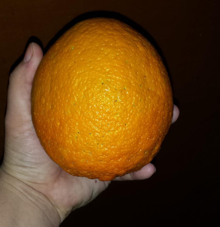 biggest orange 2